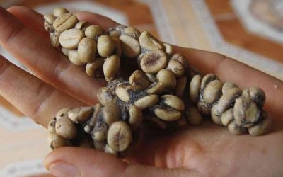 The Most Expensive Coffee on Earth
